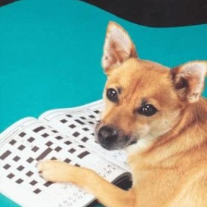 Mind Games for Dogs - Dogwise Solution